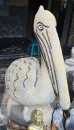 Pelican - Standing