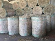Rhodes Grass - Round Bales - Feed Hay
